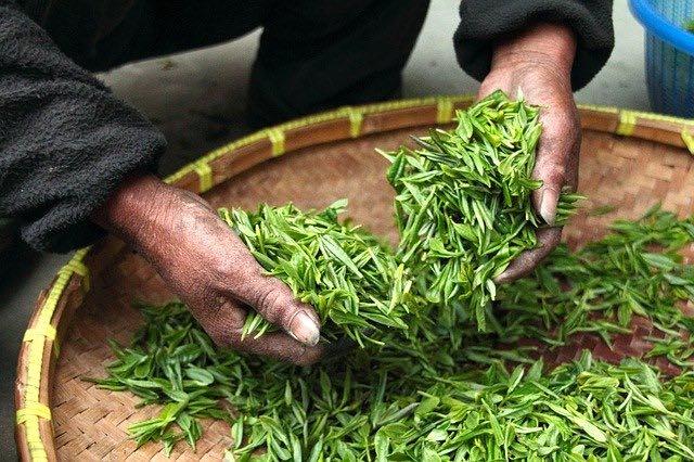 Les avantages du thé vert japonais
