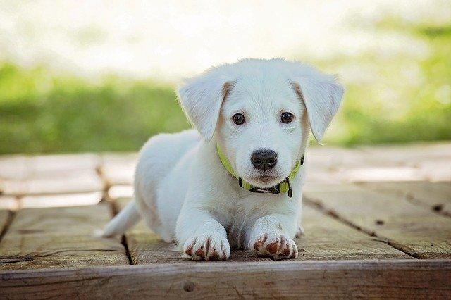 Les informations indispensables à savoir sur les médicaments pour chien