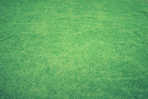 Le gazon synthétique, une bonne option pour parfaire votre jardin